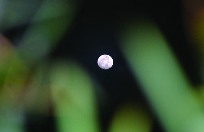 Moon and Green Reflection