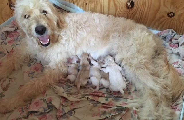 Nalu with 6 puppies