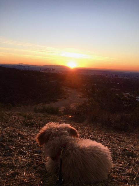 Lani with NY sunrise
